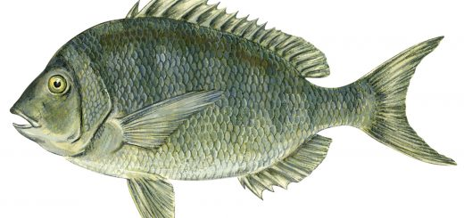 Why Are fish important to the ecosystem